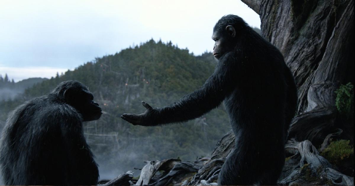cesare tende la mano all'orango suo amico - nerdface